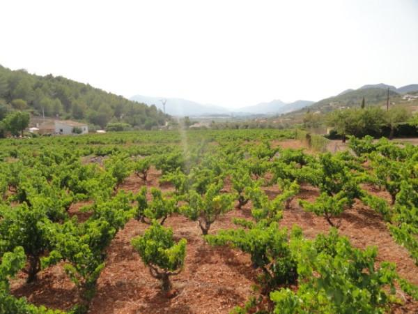 Finca For Sale in Jalon Valley - Photo 4